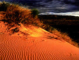 Kalahari Dunes - Northern Cape