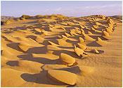 Kalahari Witsand - Nature Reserve: - Northern Cape