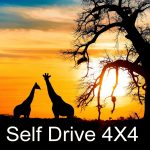 Self Drive - 4x4 and Camper Rental